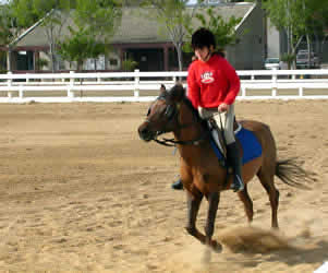 Rider at the canter